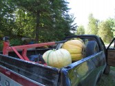 Big pumpkins in the truck